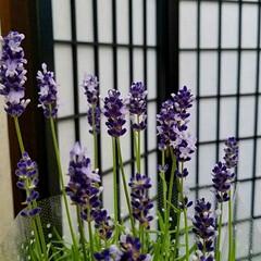 香り/グリーン/花/梅雨/ボタニカル/インテリア/... 今週のお出迎えのお花🌷  梅雨に入ってス…
