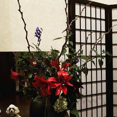 わたしのお気に入り/令和元年フォト投稿キャンペーン/令和の一枚/フォロー大歓迎/LIMIAファンクラブ/LIMIAペット同好会/... 今週のお出迎えの華✨  久々に玄関のお花…