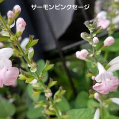 ガーデン/花/庭/金柑/🍘 最近のお庭です☝ 同じ🌺🍊🌳等の投稿です…(2枚目)