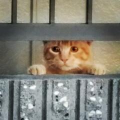 野良/さんぽ/いぬ/猫/ペット/おでかけ うちの🐶のお散歩中に野良猫ちゃんが🐶を見…