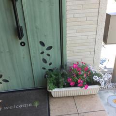 玄関 一部、枯れていますが、玄関のお花です!ま…