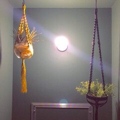 マクラメプラントハンガー/フェイクグリーン/壁紙/裸電球/トイレ/リノベ 【うちのリノベ】 トイレ。  壁紙グリー…