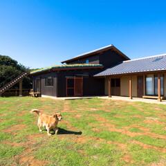 ドッグラン/ペット/犬/宿/草屋根/回廊/... 有明海を望む高台で、ワンちゃん達が走り回…