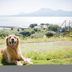 草屋根/芝生/犬/屋根上 草屋根からは、有明海、雲仙岳が絵画のよう…
