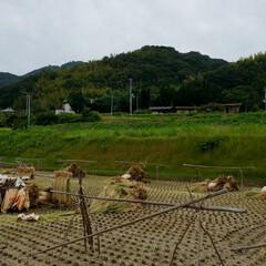 草屋根/平屋/木造/片流れ/風景/景観/... 季節と共に緑の色合いが変わり、それと共に…(1枚目)