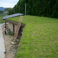 草屋根/片流れ屋根/平屋/工房/陶芸工房/梯子/... 草屋根の軒先等の端部をどう見せるかが非常…