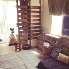 木とグレー/アパートでもDIY/アパート暮らし/居間/廃材DIY/キャットタワーDIY/... 木とグレー #木とグレー 模様替え