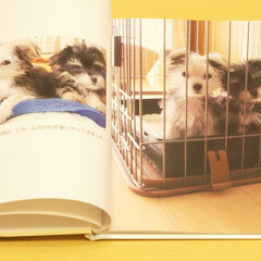 犬/兄弟犬/わんこ同好会/LIMIAペット同好会/うちの子記念日/MIX犬 2012年10月18日、ミカ・ルカがわが…(1枚目)