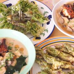 おうちごはん/昼ごはん/手料理/天ぷら/山菜/タラの芽/... 山菜が美味しい季節♪タラの芽とコシアブラ…