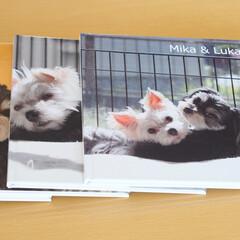 犬/兄弟犬/わんこ同好会/LIMIAペット同好会/MIX犬/フォトブック 愛犬ミカ・ルカの誕生日に、アスカネットの…(1枚目)