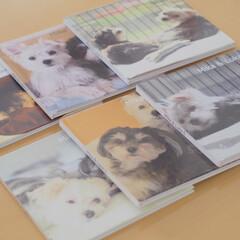 わたしのお気に入り/ペット/写真集/フォトブック/わんこ同好会/LIMIAペット同好会 愛犬ミカ・ルカは7月生まれ。毎年、誕生日…