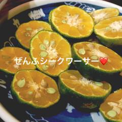 柑橘類/柑橘/柑橘系/遊び心/農業/収穫体験/... テキストで遊ぶ🐥 きょうはふんわり柑橘縛…(5枚目)