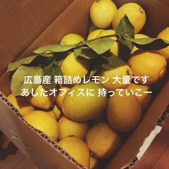 お土産/レモン/広島/2018/旅行 字足らずですが57577w  立派で綺麗…