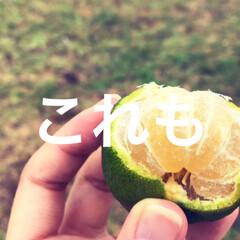 柑橘類/柑橘/柑橘系/遊び心/農業/収穫体験/... テキストで遊ぶ🐥 きょうはふんわり柑橘縛…(4枚目)