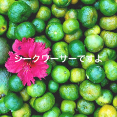 柑橘類/柑橘/柑橘系/遊び心/農業/収穫体験/... テキストで遊ぶ🐥 きょうはふんわり柑橘縛…