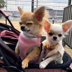 LIMIAペット同好会/LIMIAおでかけ部/フォロー大歓迎/ペット/ペット仲間募集/犬/... 最近は2匹ともとっても楽しみにしてくれて…