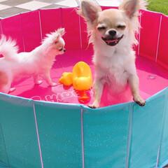 犬派/おすすめアイテム/令和の一枚/フォロー大歓迎/LIMIAファンクラブ/LIMIAペット同好会/... お庭でプール開きしました❣️ プールはず…
