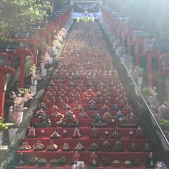 ひなまつり/勝浦/千葉/ひな祭り/おでかけ 勝浦の「ビッグひな祭り」〜 神社の階段に…