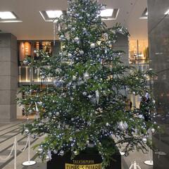 高島屋/新宿/クリスマスツリー/クリスマス/おでかけ 新宿高島屋のクリスマスツリー! たまたま…