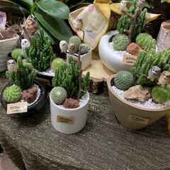 緑のある暮らし/サボテン/レイクタウン/ガーデニング/花 連休中に好きなお店に寄ったら、また可愛い…