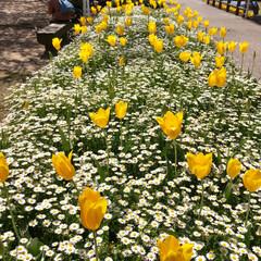 春のフォト投稿キャンペーン/はじめてフォト投稿 先日来 今が旬の筍の成長著しく連日掘って…(9枚目)