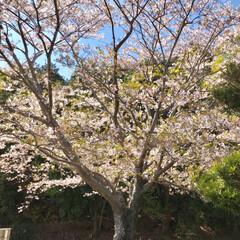 春のフォト投稿キャンペーン/はじめてフォト投稿 先日来 今が旬の筍の成長著しく連日掘って…(7枚目)