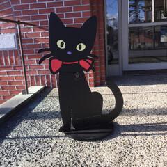 看板猫/フォロー大歓迎/ペット仲間募集/猫/にゃんこ同好会/おでかけ/... 竹久夢二美術館の看板猫  赤いおリボンが…(1枚目)