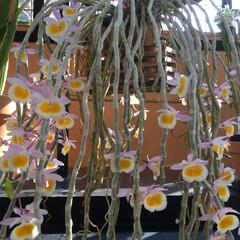 ガーデニング同好会/季節の花/サボテン/LIMIAおでかけ部/フォロー大歓迎/風景/... 綺麗です。リブサリスによく似てるけど名前…