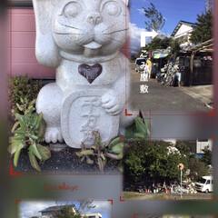 散歩道/招き猫/山茶花/皇帝ダリヤ/ガーデニング/ボタン胡椒/... おはようございます。    ブラブラ歩い…