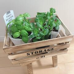 暮らし/節約/100均/ベランダ栽培/プランター/家庭菜園 プランター入れにピッタリなウッドボックス…