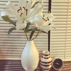ニトリのブラインド/ダイソーの時計/百合の花/ケーラー/雑貨/100均/... 大好きな百合の花とケーラーのオマジオ^ …