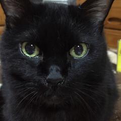 黒猫/にゃんこ同好会