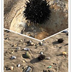 海/散歩 砂浜に打ち上げられたうに⁉︎ よくカラス…