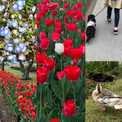 ドライブ 今日のお散歩🐶🚶♂️ 水戸市千波湖にて…