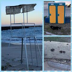 カニさん/お散歩/海水浴/海/海岸/ペット いつもの🐶散歩コース🚶♂️ 昨日は無か…