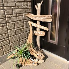 流木/玄関/ハンドメイド お散歩🐶の時に拾ってきた流木で作ってみま…