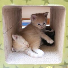 ペット/猫/兄弟猫/子猫 寝落ちしたナナとまだまだ遊び足りないギン…