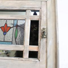 ペット/猫/ステンドグラス/窓/DIY ステンドグラスの窓の隙間からのぞき見して…