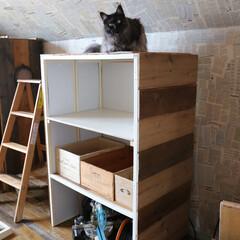 猫ケージ/リメイク/DIY/猫/収納棚/木箱 使わなくなった猫ケージをリメイク中。  …