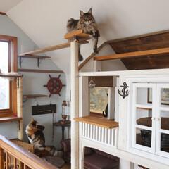 DIY/小屋/キャットタワー/キャットウォーク/ペット/猫/... 猫たちが楽しく遊んでのんびりくつろげるよ…