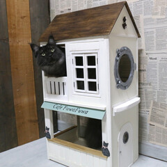 ペット/猫/メインクーン/キャットハウス/小屋/DIY/... 手作りキャットハウス2階の窓から顔をだし…