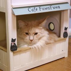 ペット/猫/DIY/カフェ風/メインクーン/キャットハウス/... 手作りキャットハウスのカフェコーナーでま…