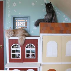 ペット/猫/DIY/小屋/キャットウォーク 猫は高いところが大好き! DIYした家の…(1枚目)