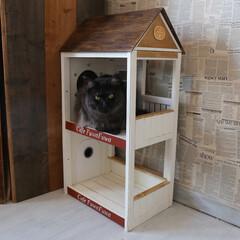 ペット/猫/DIY/小屋/キャットハウス/うちの子ベストショット 手作りキャットハウス、裏側はこうなってい…