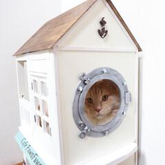ペット/猫/DIY/キャットハウス/小屋/メインクーン 手作りキャットハウス(小)は軽いので、ち…