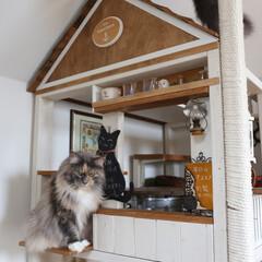 ペット/猫/メインクーン/キャットハウス/カフェ風 手作りキャットハウスのカフェコーナーでお…