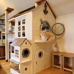 ペット/猫/DIY/キャットハウス/小屋/キャットタワー/... 手作りキャットハウス、大きいのと小さいの…(1枚目)