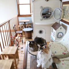 ペット/猫/キャットハウス/カフェ風 テーブル側から手作りキャットハウスの写真…