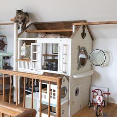ペット/猫/メインクーン/DIY/キャットハウス/キャットウォーク/... 手作りキャットハウス(大)の一番高いステ…