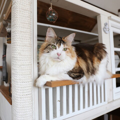 ペット/猫/DIY/キャットステップ/キャットハウス/うちの子ベストショット 手作りキャットハウス(大)はあちこちに猫…